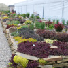 Completed SunSparkler® Sedum Rock Garden